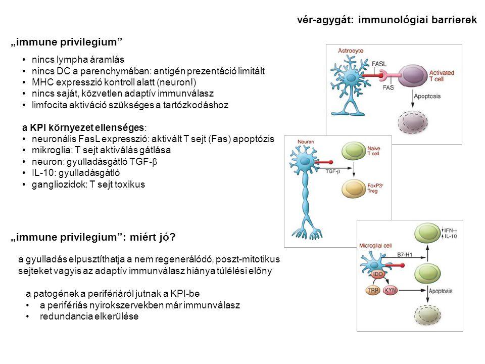 """nincs lympha áramlás nincs DC a parenchymában: antigén prezentáció limitált MHC expresszió kontroll alatt (neuron!) nincs saját, közvetlen adaptív immunválasz limfocita aktiváció szükséges a tartózkodáshoz a KPI környezet ellenséges: neuronális FasL expresszió: aktivált T sejt (Fas) apoptózis mikroglia: T sejt aktiválás gátlása neuron: gyulladásgátló TGF-  IL-10: gyulladásgátló gangliozidok: T sejt toxikus """"immune privilegium """"immune privilegium : miért jó."""