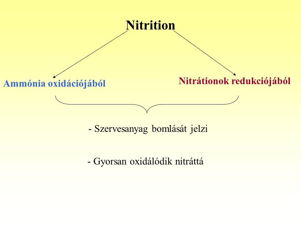 Nitrition Ammónia oxidációjából Nitrátionok redukciójából - Szervesanyag bomlását jelzi - Gyorsan oxidálódik nitráttá