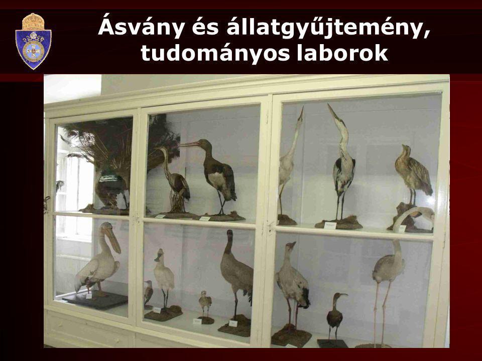 Ásvány és állatgyűjtemény, tudományos laborok