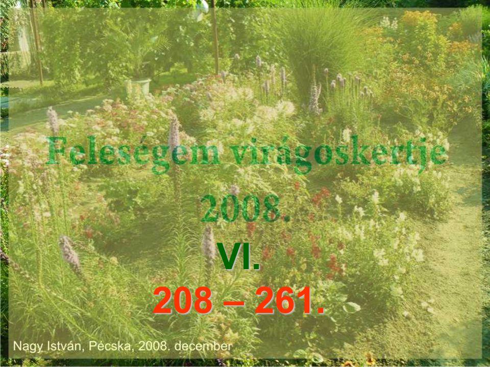 VI. 208 – 261.