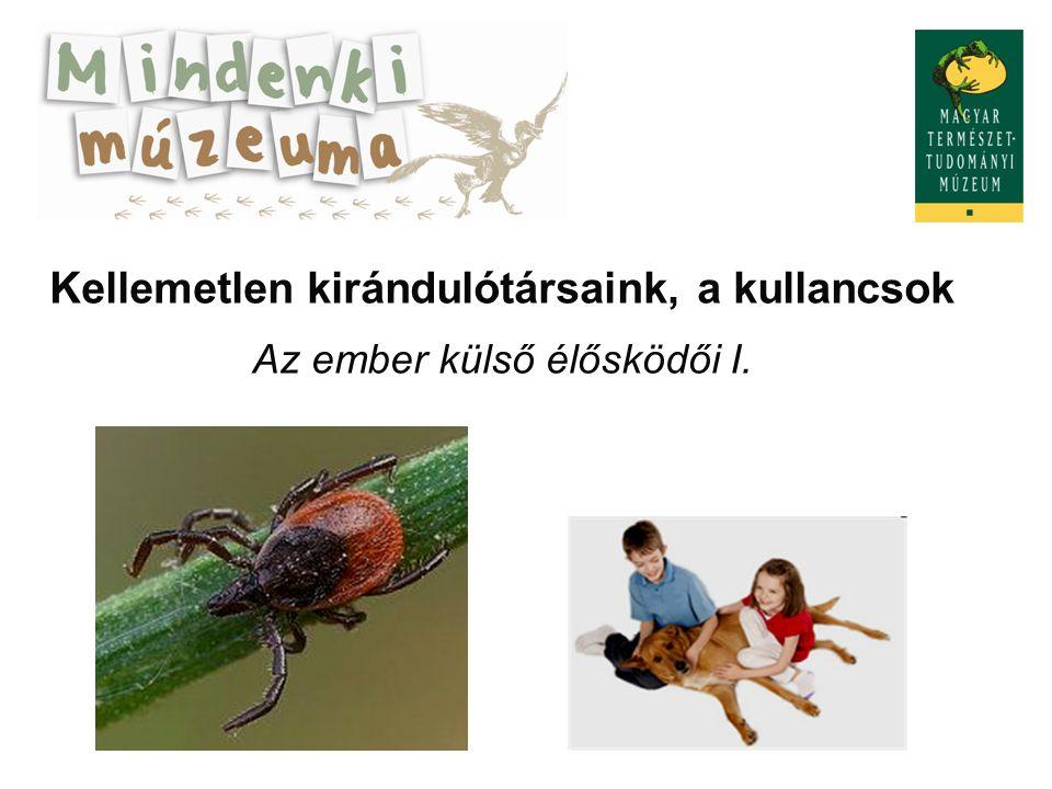 "Ticks – ""unpleasant fellow-travellers Human ectoparasites 1"