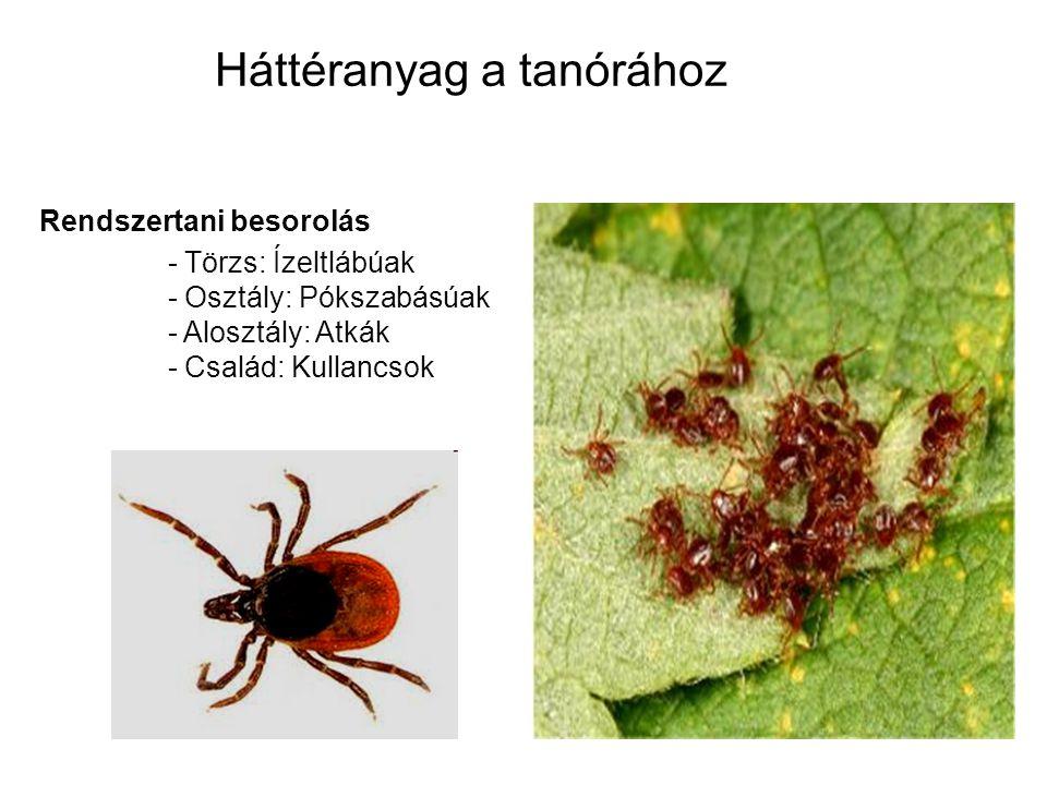 Háttéranyag a tanórához Rendszertani besorolás - Törzs: Ízeltlábúak - Osztály: Pókszabásúak - Alosztály: Atkák - Család: Kullancsok