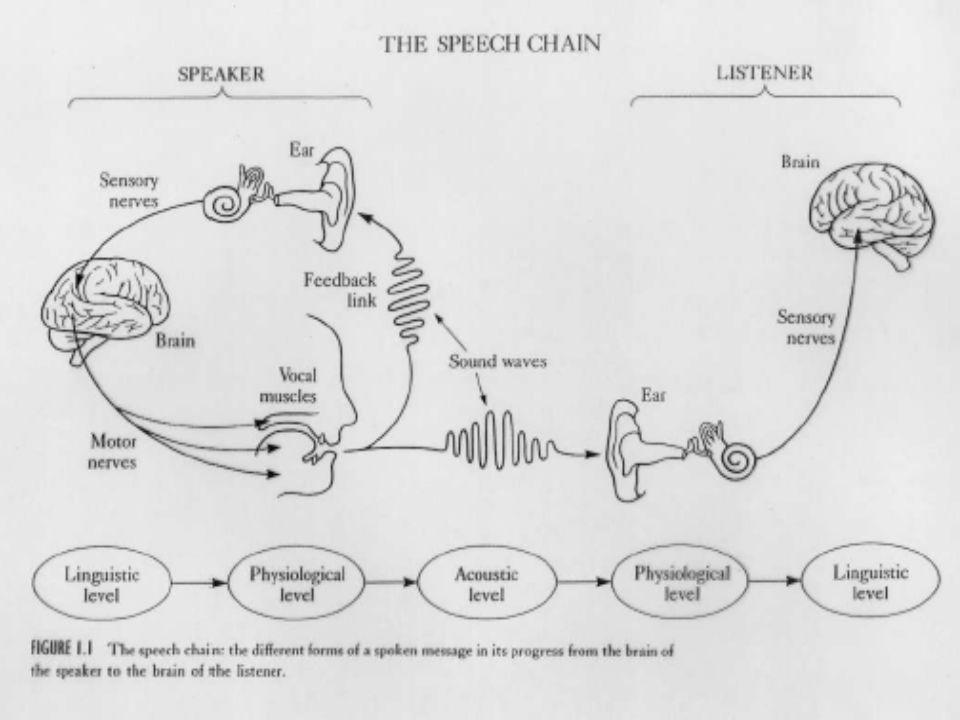 Beszéd akusztikai leirása Nyelvi jelentéssel bíró akusztikai produktum, Számos nem nyelvi jelentést hordozó információval Beszéd igen erősen redundans Akusztikai szerkezete a beszélőtől és a beszédhelyzettől (átviteli körülmények) függően változik, de még egy beszélő esetében is.