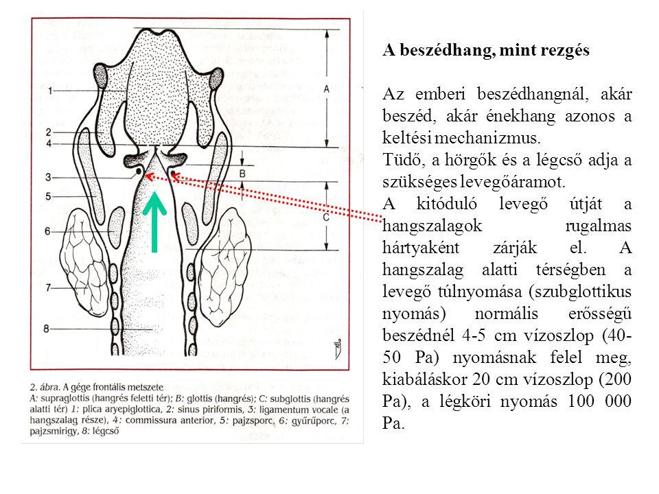A beszédhang, mint rezgés Az emberi beszédhangnál, akár beszéd, akár énekhang azonos a keltési mechanizmus.