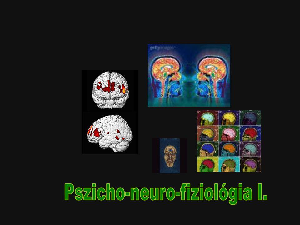 Idegrendszer Perifériás idegrendszer Központi idegrendszer –Gerincvelő –Agy Agytörzs Kisagy Limbikus rendszer Neo-cortex