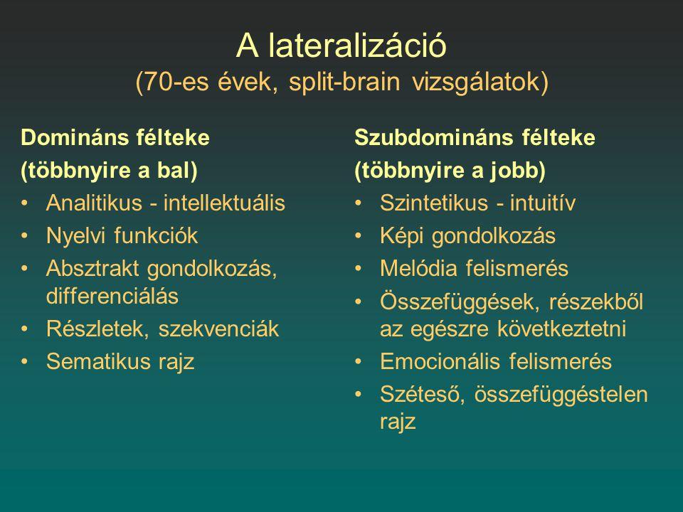 A lateralizáció (70-es évek, split-brain vizsgálatok) Domináns félteke (többnyire a bal) Analitikus - intellektuális Nyelvi funkciók Absztrakt gondolkozás, differenciálás Részletek, szekvenciák Sematikus rajz Szubdomináns félteke (többnyire a jobb) Szintetikus - intuitív Képi gondolkozás Melódia felismerés Összefüggések, részekből az egészre következtetni Emocionális felismerés Széteső, összefüggéstelen rajz