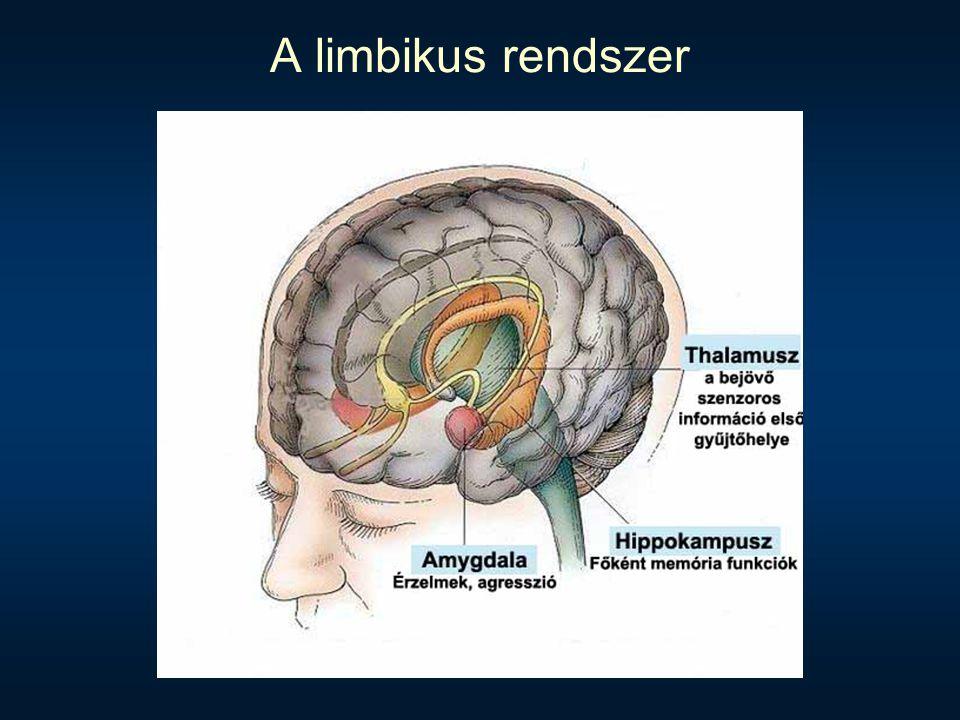 A limbikus rendszer