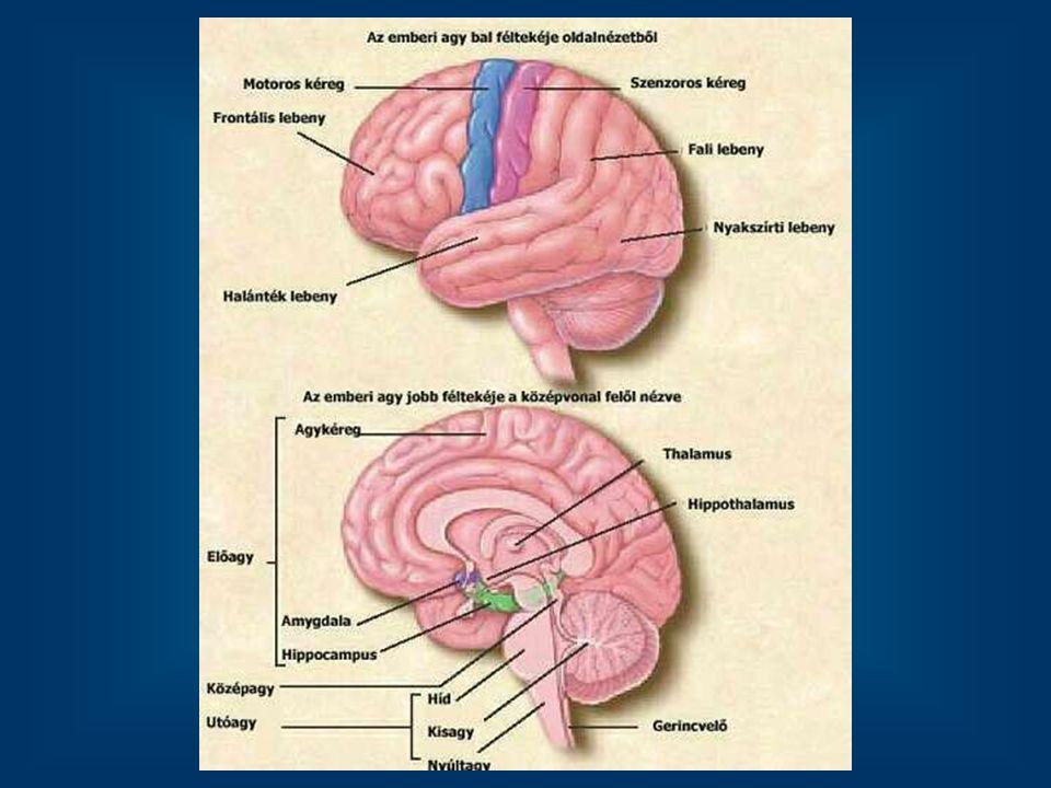 Hipnózis - fMRI Hipnózisban levő személy agyi aktivitása, miközben képeket próbál előhívni.