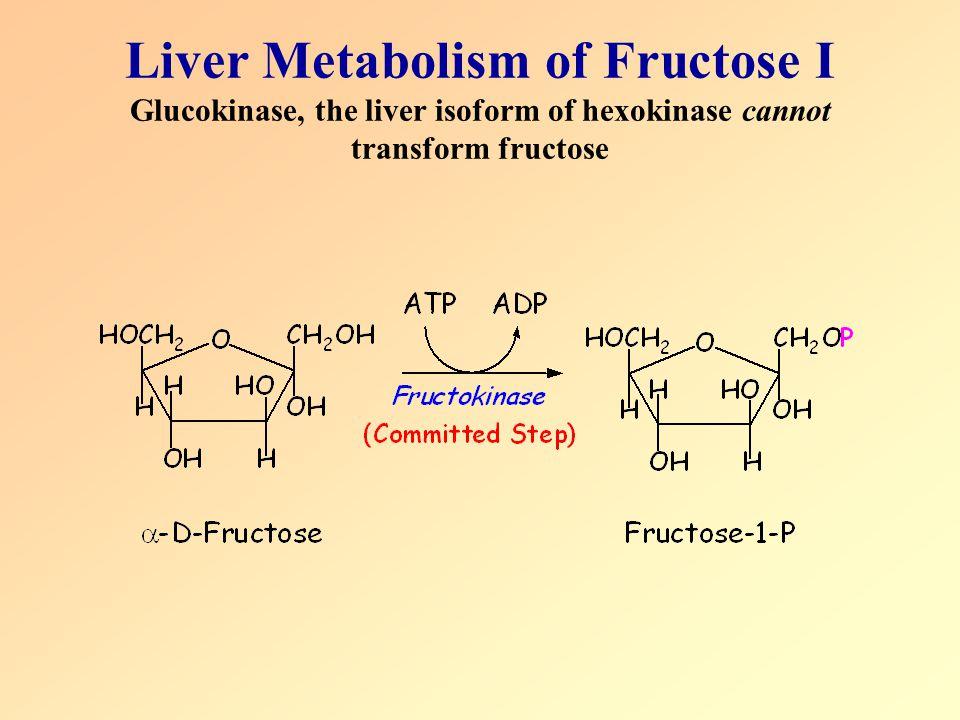 Liver Metabolism of Fructose I Glucokinase, the liver isoform of hexokinase cannot transform fructose
