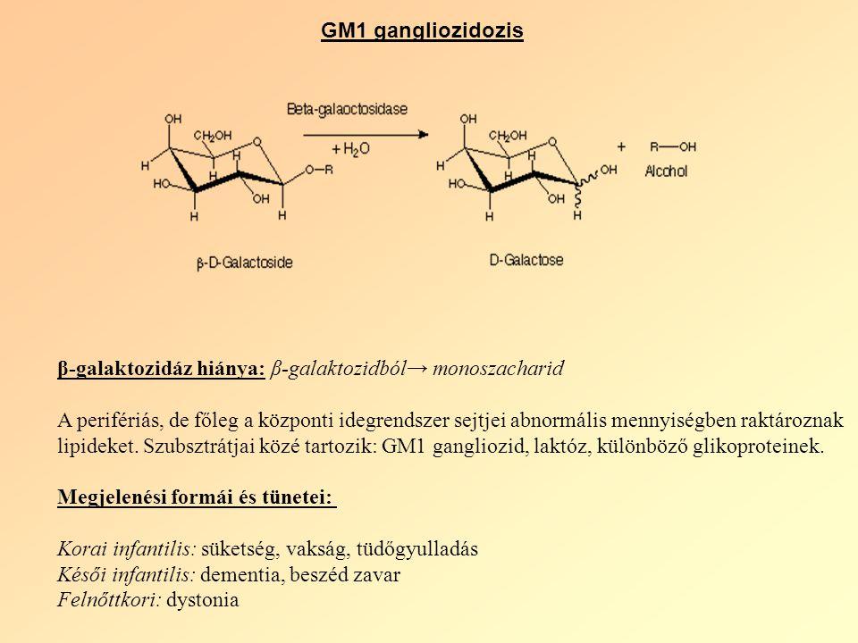 GM1 gangliozidozis β-galaktozidáz hiánya: β-galaktozidból→ monoszacharid A perifériás, de főleg a központi idegrendszer sejtjei abnormális mennyiségben raktároznak lipideket.