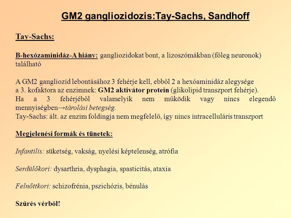 GM2 gangliozidozis:Tay-Sachs, Sandhoff Tay-Sachs: Β-hexózaminidáz-A hiány: gangliozidokat bont, a lizoszómákban (főleg neuronok) található A GM2 gangliozid lebontásához 3 fehérje kell, ebből 2 a hexóaminidáz alegysége a 3.