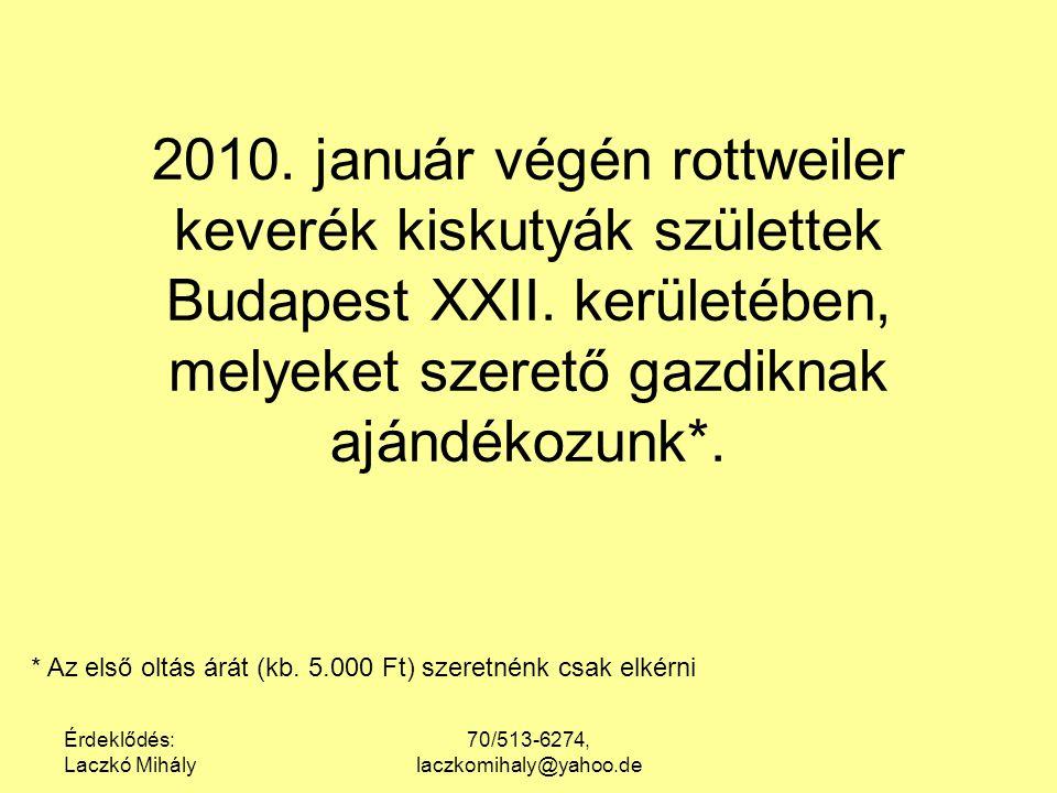 Érdeklődés: Laczkó Mihály 70/513-6274, laczkomihaly@yahoo.de 2010. január végén rottweiler keverék kiskutyák születtek Budapest XXII. kerületében, mel