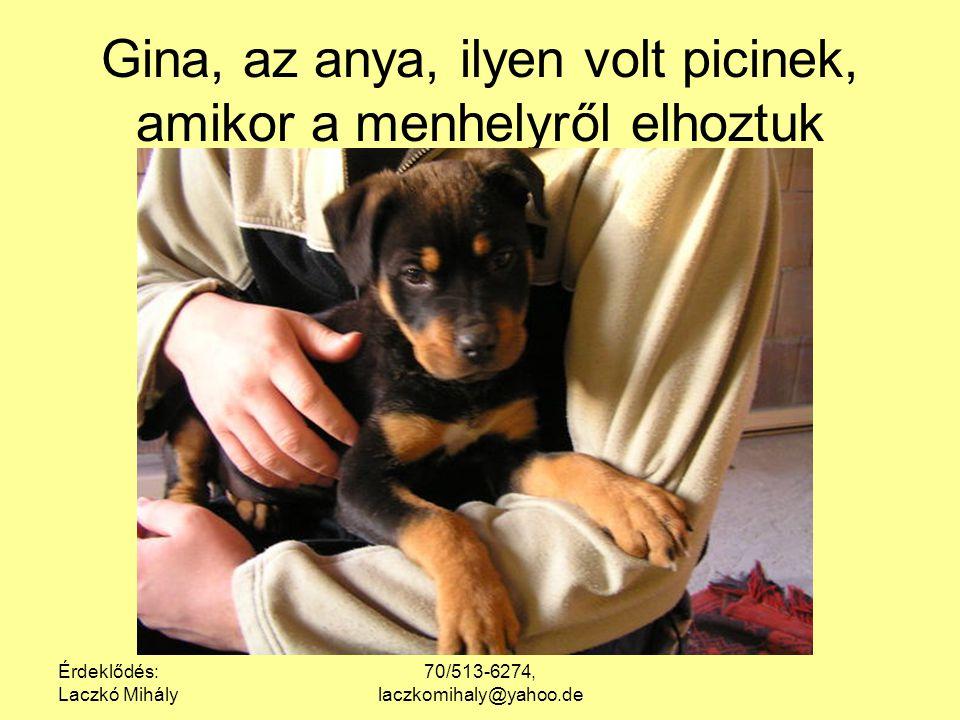 Érdeklődés: Laczkó Mihály 70/513-6274, laczkomihaly@yahoo.de Gina, az anya, ilyen volt picinek, amikor a menhelyről elhoztuk