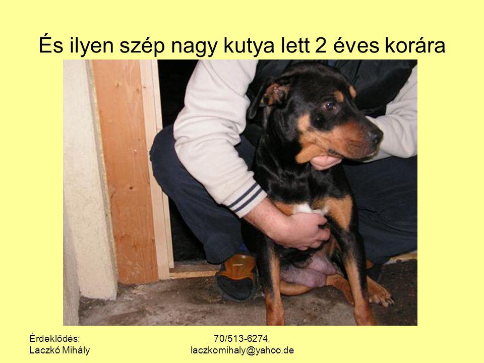 Érdeklődés: Laczkó Mihály 70/513-6274, laczkomihaly@yahoo.de A picik most így néznek ki