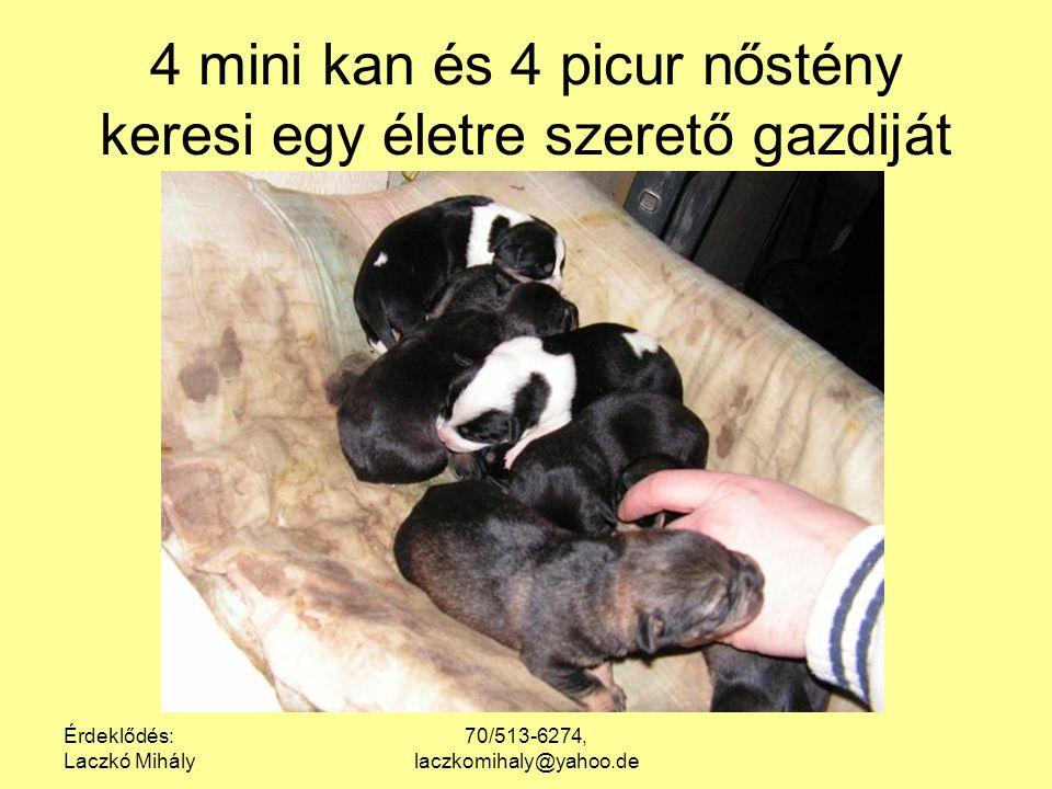 Érdeklődés: Laczkó Mihály 70/513-6274, laczkomihaly@yahoo.de 4 mini kan és 4 picur nőstény keresi egy életre szerető gazdiját
