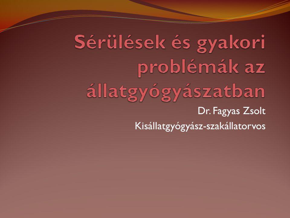 Dr. Fagyas Zsolt Kisállatgyógyász-szakállatorvos