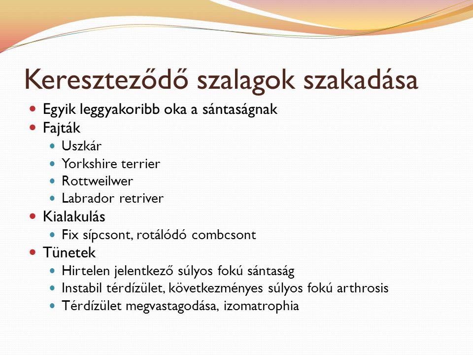 Fülgyulladás Kórokok Hajlamosító tényező: hosszú, megtört, szűk, szőrrel borított, lógó fülkagyló Kiváltó tényezők: atópia, allergia, idegen test, víz (úszás, kozmetika) mikrobák, paraziták Tünetek Fülét rázza, vakarja, dörzsöli Othaematoma Bűzös, váladékos tartalom Fejoldaltartás Teendők Óvatos tisztítás Állatorvoshoz eljuttatni az állatot