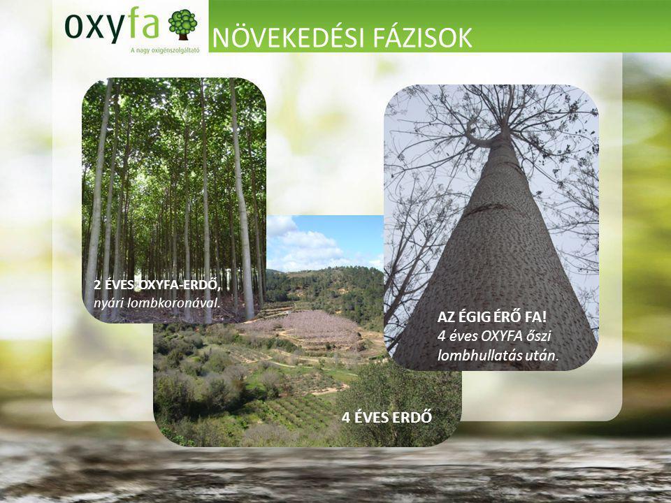 NÖVEKEDÉSI FÁZISOK 2 ÉVES OXYFA-ERDŐ, nyári lombkoronával.