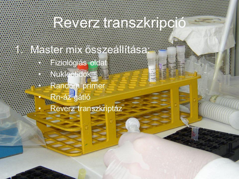 Reverz transzkripció 1.Master mix összeállítása: Fiziológiás oldat Nukleotidok Random primer Rn-áz gátló Reverz transzkriptáz