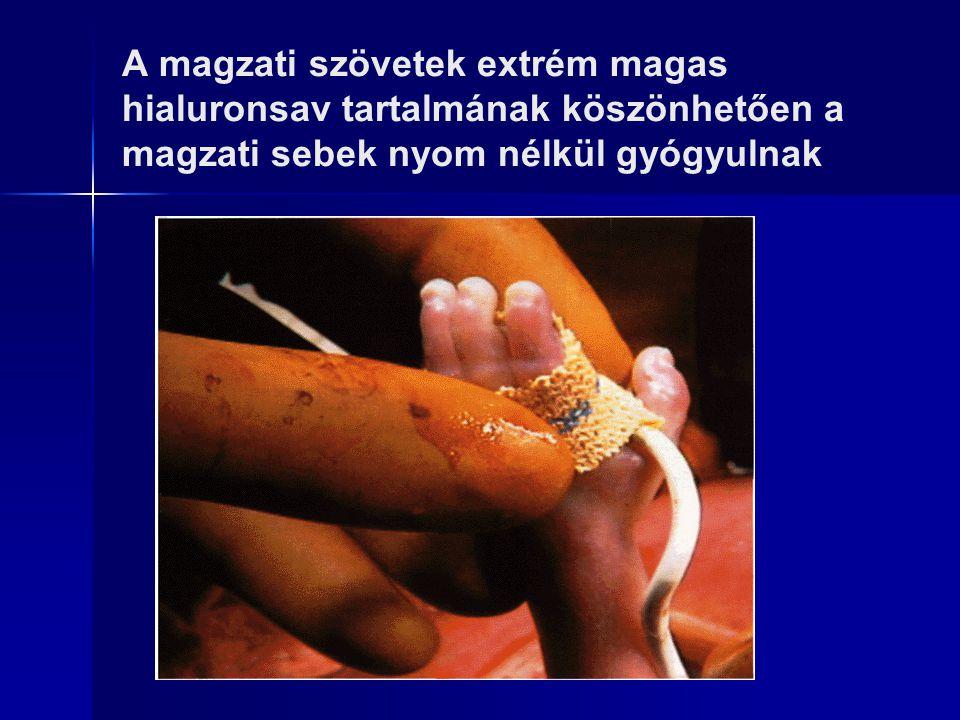 A magzati szövetek extrém magas hialuronsav tartalmának köszönhetően a magzati sebek nyom nélkül gyógyulnak