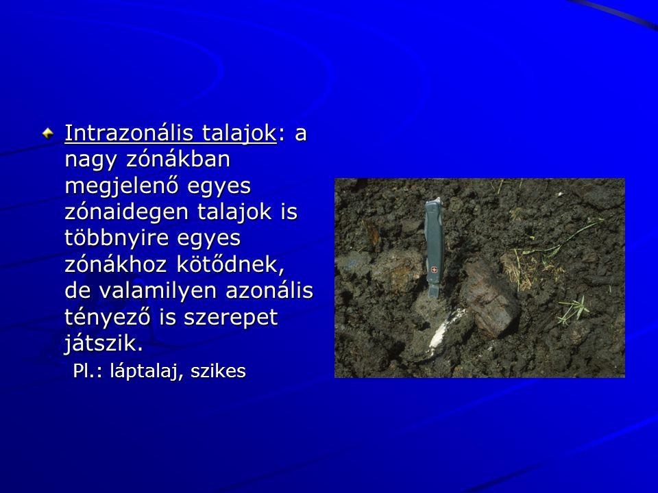 Intrazonális talajok: a nagy zónákban megjelenő egyes zónaidegen talajok is többnyire egyes zónákhoz kötődnek, de valamilyen azonális tényező is szere