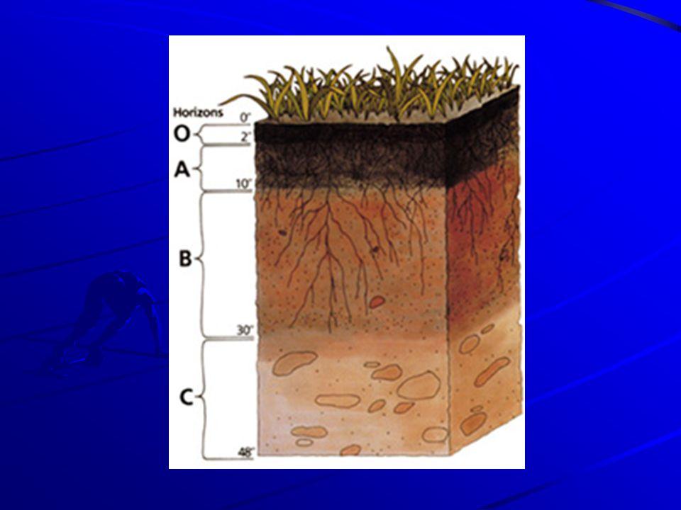 Talajtípusok: Zonális talajok: övezethez illeszkedő, az adott földrajzi térség éghajlati és növényzeti adottságainak megfelelő talaj.