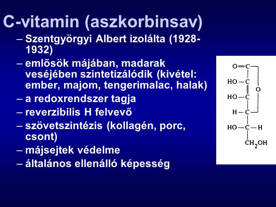 C-vitamin (aszkorbinsav) –Szentgyörgyi Albert izolálta (1928- 1932) –emlősök májában, madarak veséjében szintetizálódik (kivétel: ember, majom, tenger