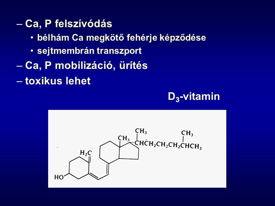 –Ca, P felszívódás bélhám Ca megkötő fehérje képződése sejtmembrán transzport –Ca, P mobilizáció, ürítés –toxikus lehet D 3 -vitamin