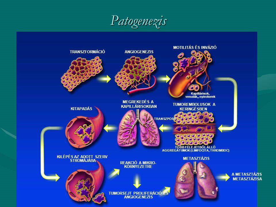 A citotoxikus szerek osztályozása Nukleotid bioszintézis gátlók – antimetabolitokNukleotid bioszintézis gátlók – antimetabolitok –Folátantagonisák: methotrexat, raltitrexed, pemetrexed, trimetrexat, –Pirimidin-antimetabolitok: 5-fluorouracil, capecitabin, floxuridin, UFT, S1 –DPD-gátló vegyületek: 5-etiniluracil, 5-etil-'2-dezoxiuridin –Dezoxictidin-analógok: citozin-arabinozid, azacitidin, gemcitabin –Purin-analógok: 6-mercaptopurin, 6-tioguanin –Egyéb purin analógok: fludarabin-P, cladribin (2-dezoxiadenozin), pentostatin (2'-dezoxicoformycin) DNS támadási pontú hatóanyagokDNS támadási pontú hatóanyagok –Alkilezőszerek - Nitrozoureák: (egyedi lánctörések, keresztkötések) carmustin, melphalan, busulfan, chlorambucil, cyclofosfamid, ifosfamid, procarbazin, dacarbazin, estramustin –Platinavegyületek: cisplatin, carboplatin, oxaliplatin –Tumorantibiotikumok: (lánctörés) actinomycin D, bleomycin, mitomycin C