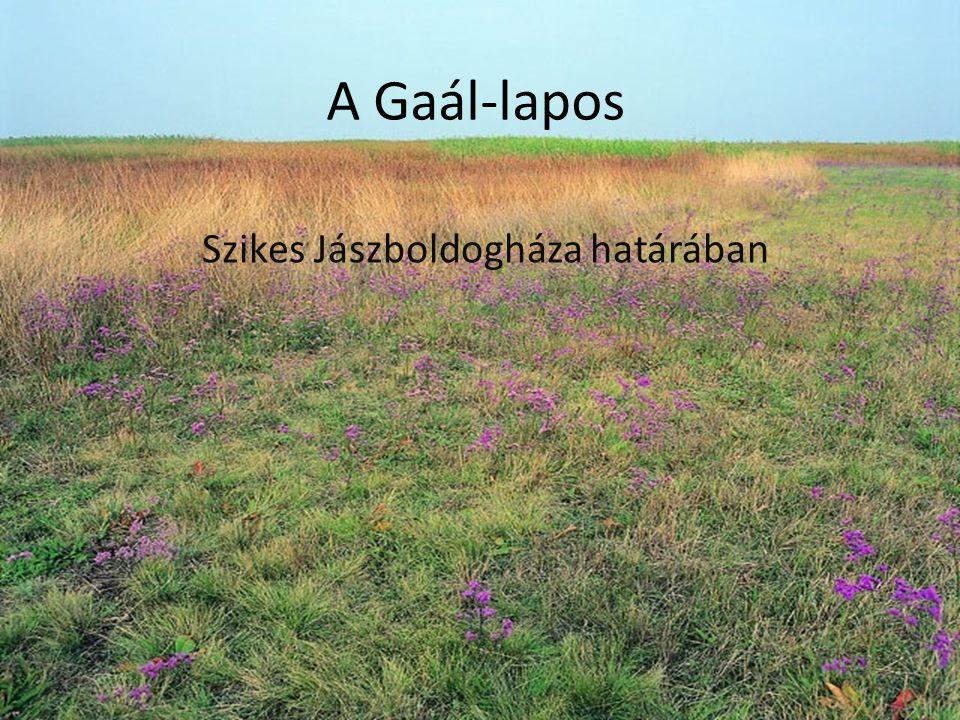 Szikes Jászboldogháza határában A Gaál-lapos