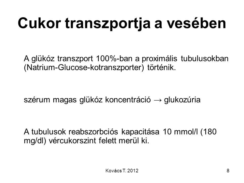 Cukor transzportja a vesében A glükóz transzport 100%-ban a proximális tubulusokban (Natrium-Glucose-kotranszporter) történik. szérum magas glükóz kon