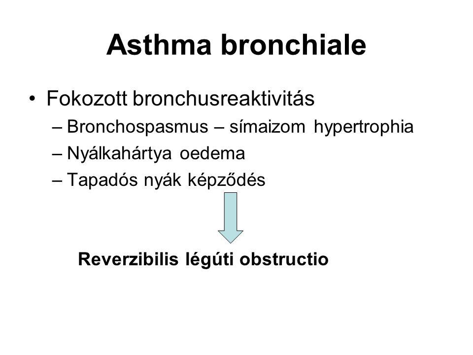 Asthma bronchiale Fokozott bronchusreaktivitás –Bronchospasmus – símaizom hypertrophia –Nyálkahártya oedema –Tapadós nyák képződés Reverzibilis légúti