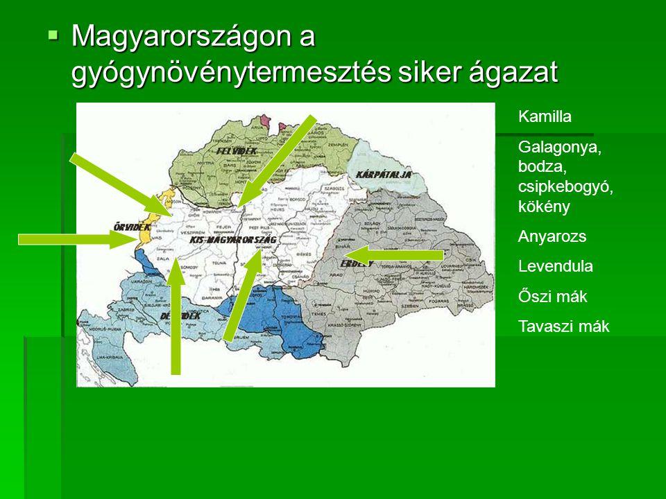 MMMMagyarországon a gyógynövénytermesztés siker ágazat Kamilla Galagonya, bodza, csipkebogyó, kökény Anyarozs Levendula Őszi mák Tavaszi mák