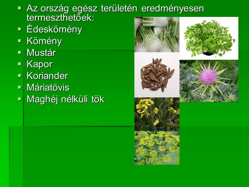 AAAAz ország egész területén eredményesen termeszthetőek: ÉÉÉÉdeskömény KKKKömény MMMMustár KKKKapor KKKKoriander MMMMária