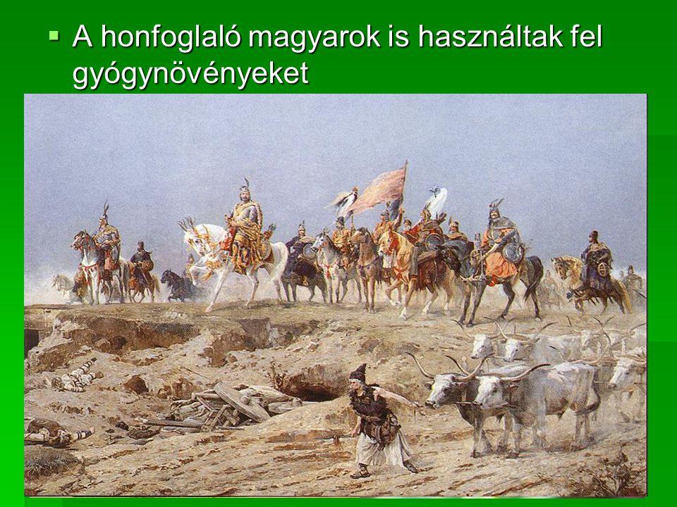 AAAA honfoglaló magyarok is használtak fel gyógynövényeket