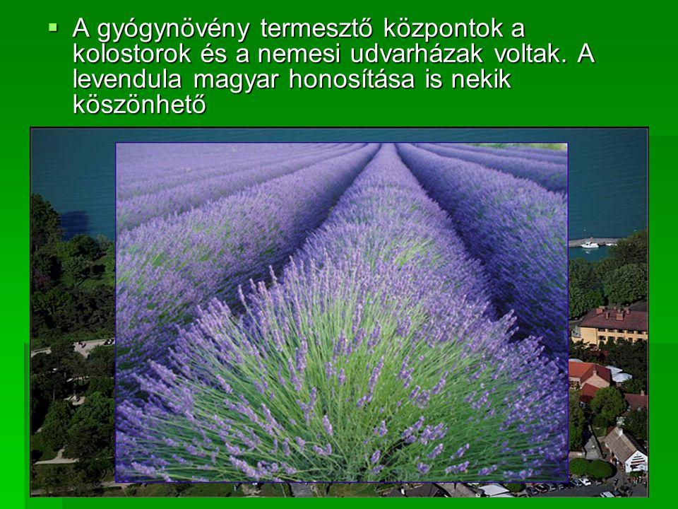 AAAA gyógynövény termesztő központok a kolostorok és a nemesi udvarházak voltak. A levendula magyar honosítása is nekik köszönhető