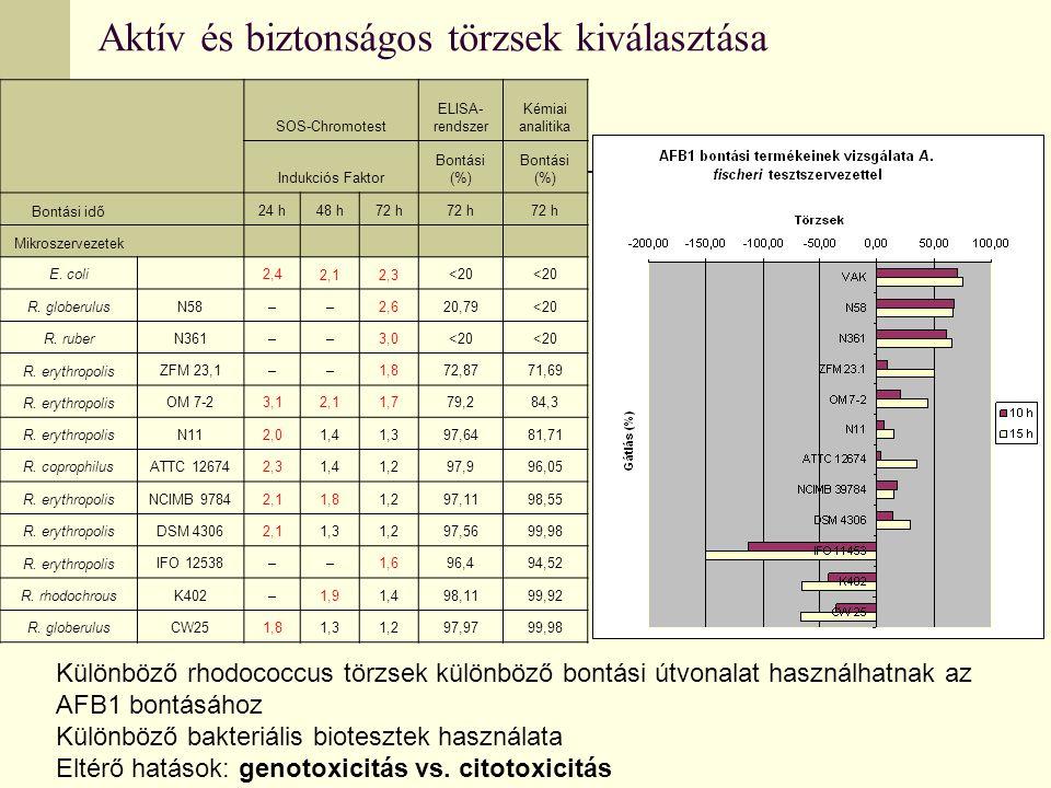 Aktív és biztonságos törzsek kiválasztása SOS-Chromotest ELISA- rendszer Kémiai analitika Indukciós Faktor Bontási (%) Bontási idő 24 h48 h72 h Mikroszervezetek E.