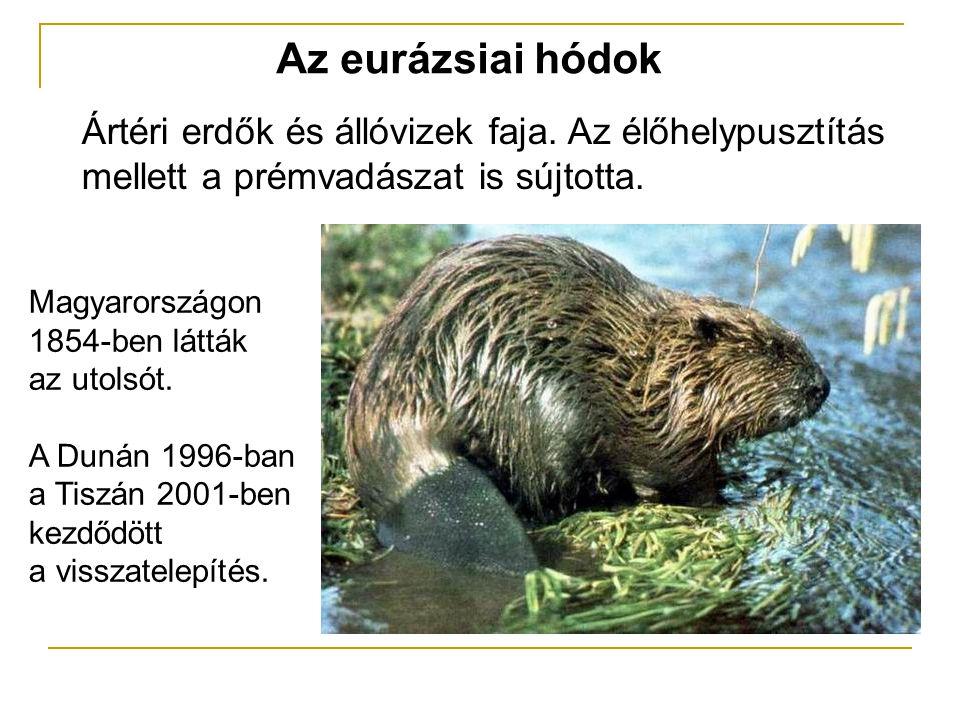 Az eurázsiai hódok Ártéri erdők és állóvizek faja. Az élőhelypusztítás mellett a prémvadászat is sújtotta. Magyarországon 1854-ben látták az utolsót.