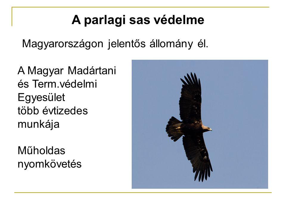 A parlagi sas védelme Magyarországon jelentős állomány él. A Magyar Madártani és Term.védelmi Egyesület több évtizedes munkája Műholdas nyomkövetés