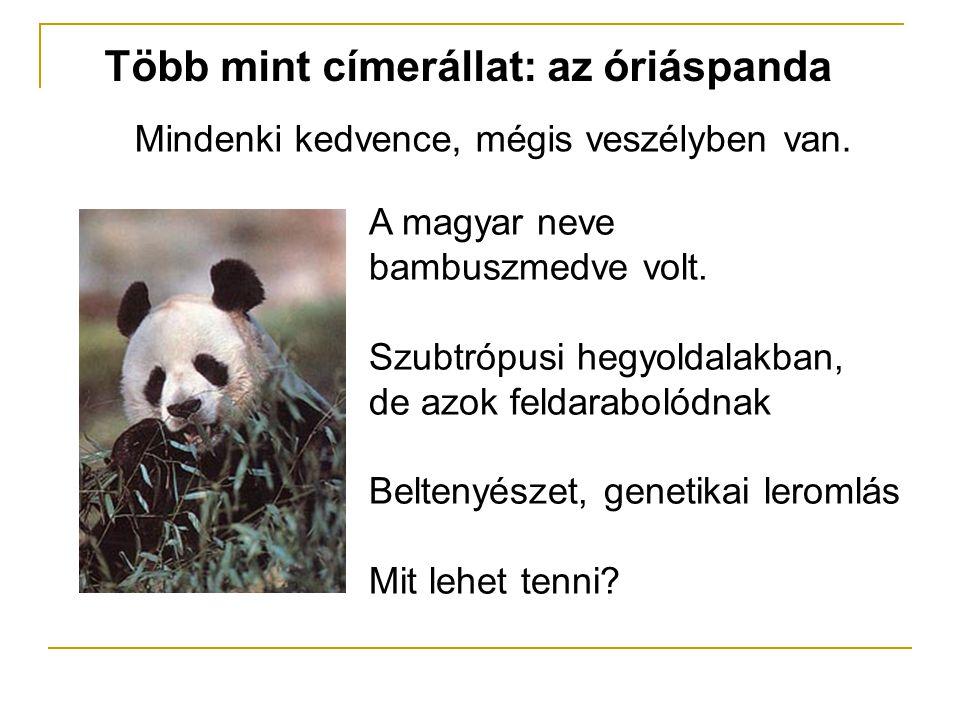 Több mint címerállat: az óriáspanda Mindenki kedvence, mégis veszélyben van. A magyar neve bambuszmedve volt. Szubtrópusi hegyoldalakban, de azok feld