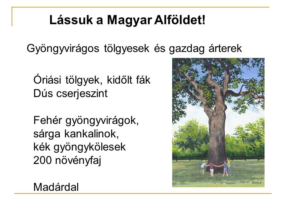 Lássuk a Magyar Alföldet! Gyöngyvirágos tölgyesek és gazdag árterek Óriási tölgyek, kidőlt fák Dús cserjeszint Fehér gyöngyvirágok, sárga kankalinok,