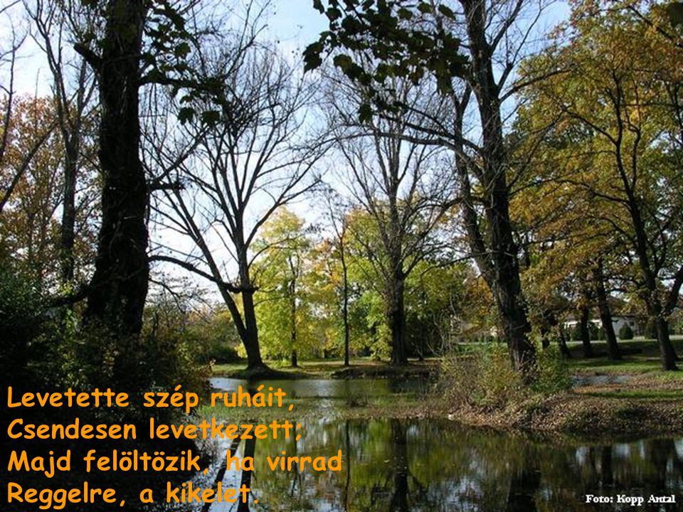 Aludjál hát, szép természet, Csak aludjál reggelig, S álmodj olyakat, amikben Legnagyobb kedved telik.