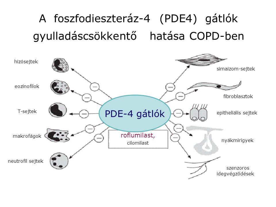 roflumilast, cilomilast hizósejtek eozinofilok T-sejtek makrofágok neutrofil sejtek simaizom-sejtek fibroblasztok epitheliális sejtek nyákmirigyek sze