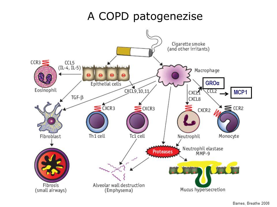 Barnes, Breathe 2008 A COPD patogenezise GROα MCP1
