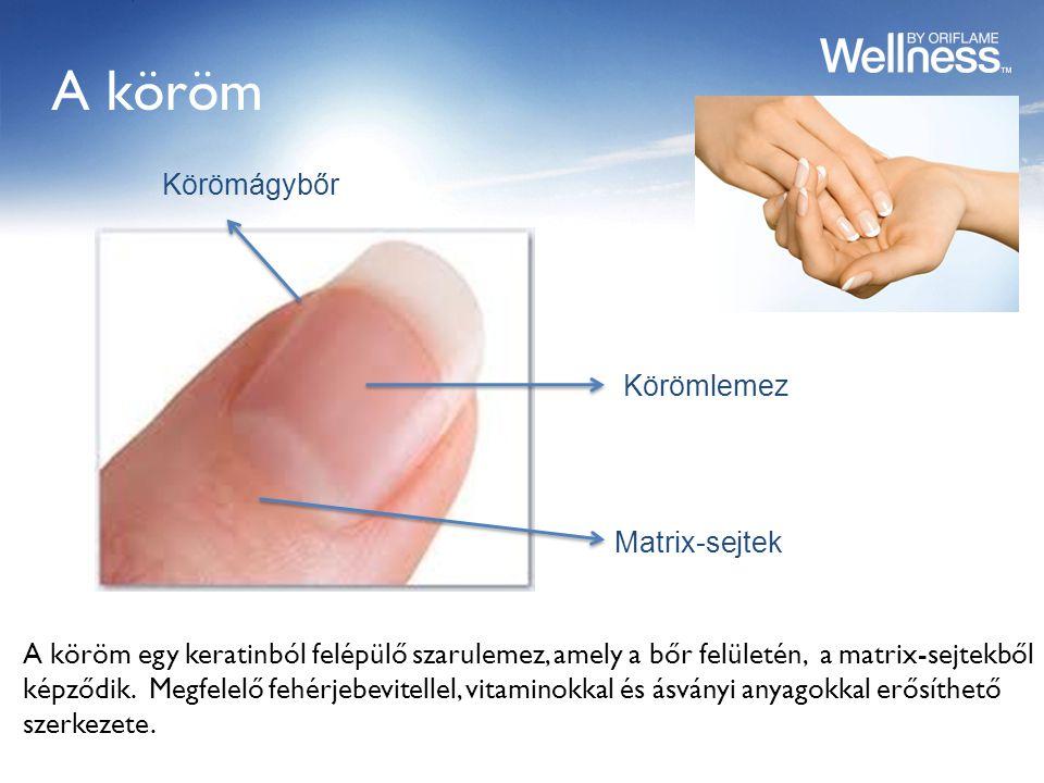 A köröm A köröm egy keratinból felépülő szarulemez, amely a bőr felületén, a matrix-sejtekből képződik.