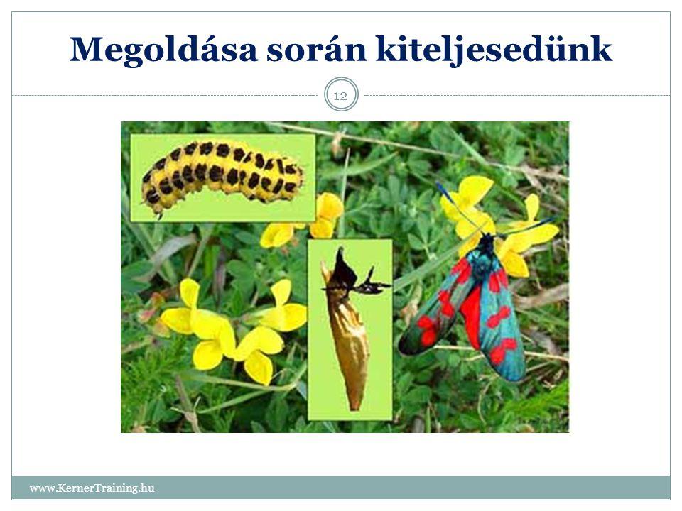 Megoldása során kiteljesedünk www.KernerTraining.hu 12