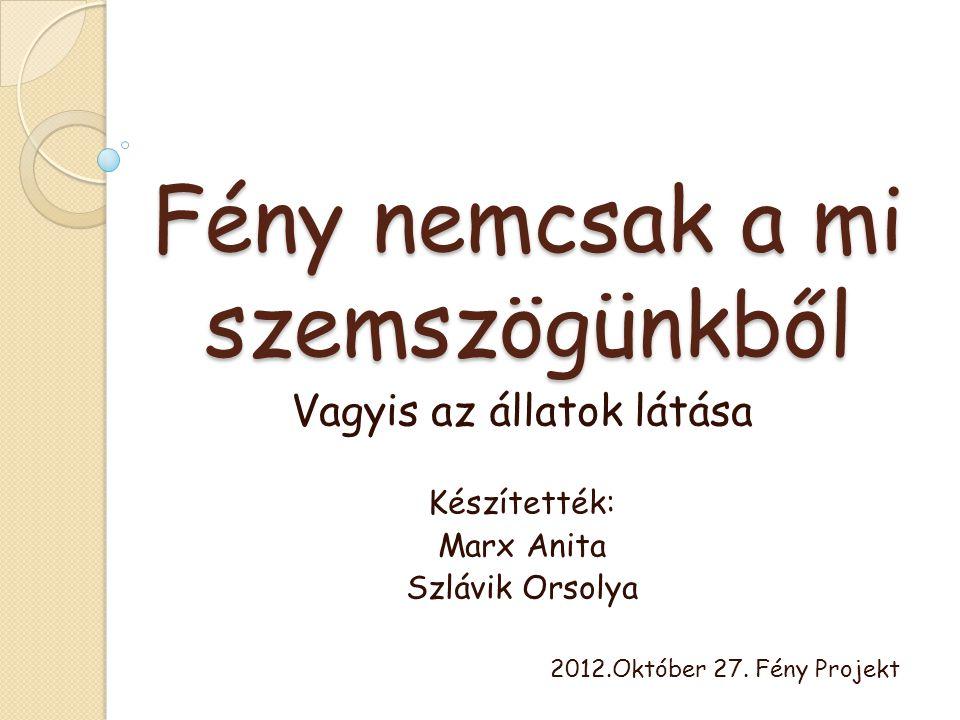 Fény nemcsak a mi szemszögünkből Vagyis az állatok látása Készítették: Marx Anita Szlávik Orsolya 2012.Október 27. Fény Projekt