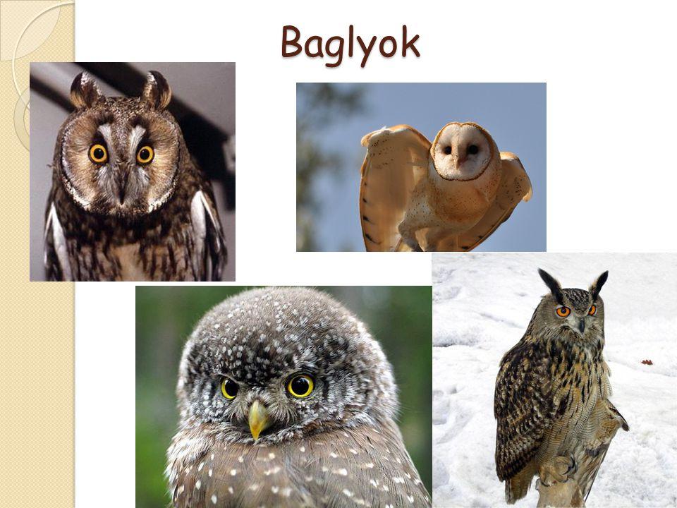 Baglyok