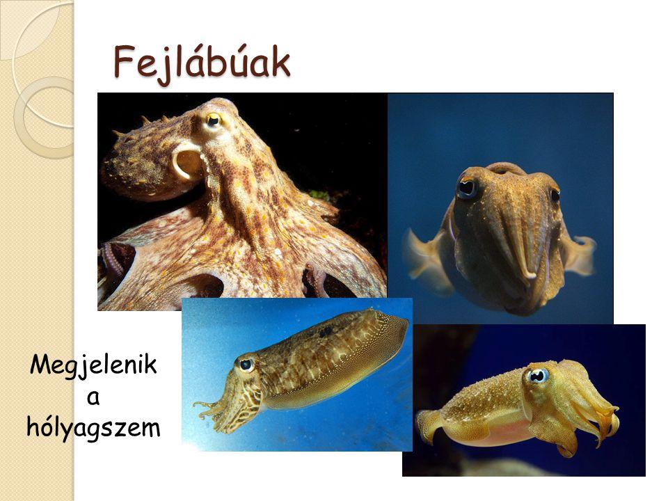 Gerincesek : Halak Lövő hal Lepény hal