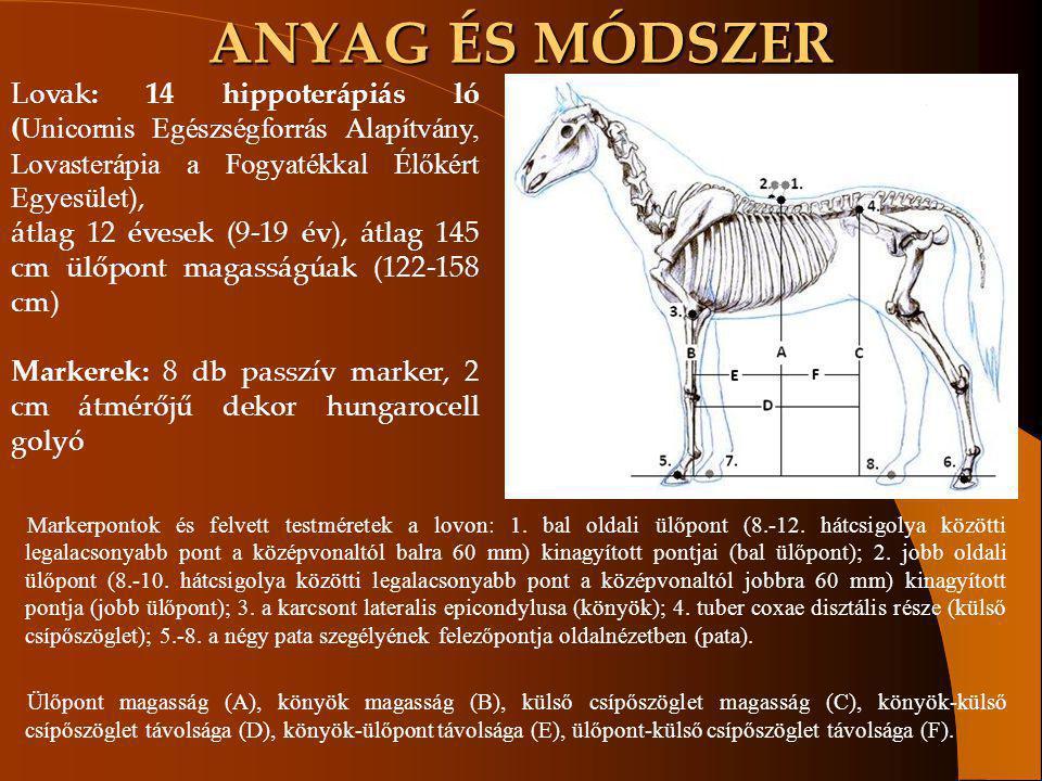 ANYAG ÉS MÓDSZER Lovak: 14 hippoterápiás ló ( Unicornis Egészségforrás Alapítvány, Lovasterápia a Fogyatékkal Élőkért Egyesület ), átlag 12 évesek (9-